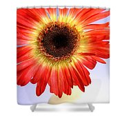 2221c1-002 Shower Curtain