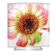 2269c-001 Shower Curtain