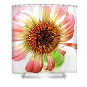 2269c Shower Curtain