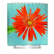2278c Shower Curtain