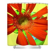 2504c-007 Shower Curtain