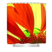 2504c-012 Shower Curtain