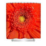 2513 Shower Curtain