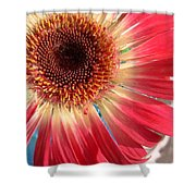 2558c1-022 Shower Curtain
