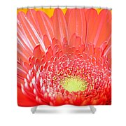 2560-001 Shower Curtain