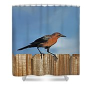27- Grackle Shower Curtain