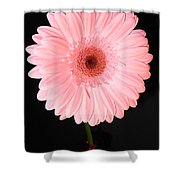 2763-001 Shower Curtain