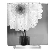 2841-001 Shower Curtain