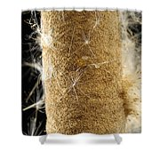 A Cattail Typha Latifolia Disperses Shower Curtain