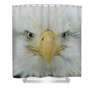 A Portrait Of An American Bald Eagle Shower Curtain