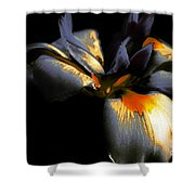 Abstract Iris Shower Curtain