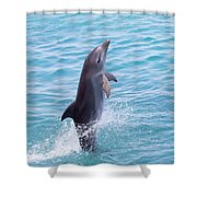 Atlantic Bottlenose Dolphin Shower Curtain