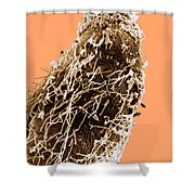 Bacteria On Sorghum Root Tip Shower Curtain