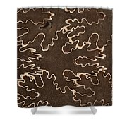 Baculites Fossil Shower Curtain