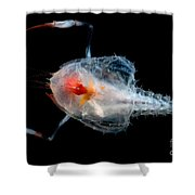 Blind Lobster Shower Curtain