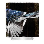 Blue Jay In Flight Shower Curtain