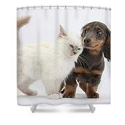Blue-point Kitten & Dachshund Shower Curtain