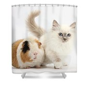Blue-point Kitten And Guinea Pig Shower Curtain