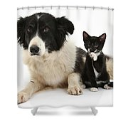 Border Collie And Tuxedo Kitten Shower Curtain