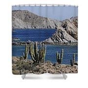Cardon Pachycereus Pringlei Cacti Shower Curtain