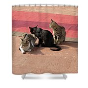 3 Cats Looking Pensive Shower Curtain