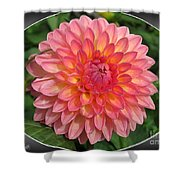 Dahlia Named Hillcrest Suffusion Shower Curtain