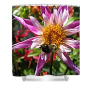 Dahlia Named Lorona Dawn Shower Curtain