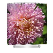 Dahlia Named Siemen Doorenbosch Shower Curtain