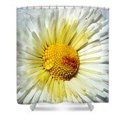 Daisy Flower Shower Curtain
