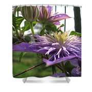 Double Clematis Named Crystal Fountain Shower Curtain