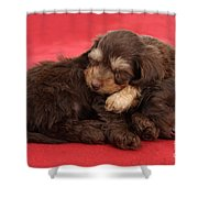 Doxie-doodle Puppies Shower Curtain