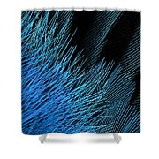 Eastern Bluebird Feathers Shower Curtain