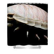 Giant Marine Isopod Shower Curtain