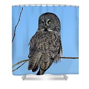 Great Gray Owl Shower Curtain