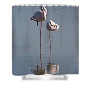 Greater Flamingo Phoenicopterus Ruber Shower Curtain