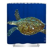 Hawksbill Sea Turtle, Kimbe Bay, Papua Shower Curtain