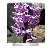 Hyacinth Named Splendid Cornelia Shower Curtain