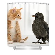 Jackdaw And Kitten Shower Curtain