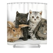 Kittens And Rabbits Shower Curtain