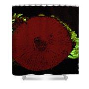 Luminescent Mushroom Panellus Stipticus Shower Curtain