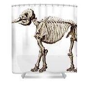 Mastodon Skeleton Shower Curtain by Science Source