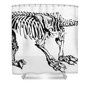 Megatherium, Extinct Ground Sloth Shower Curtain