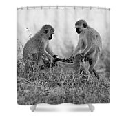 3 Monkeys Hey Its Not A Wig Shower Curtain