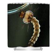Mosquito Larva Shower Curtain