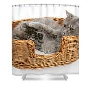 Mother Cat With Kitten Shower Curtain