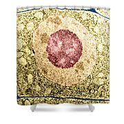Normal Cell Shower Curtain