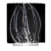 Northern Comb Jelly Shower Curtain