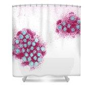 Norwalk Virus, Tem Shower Curtain