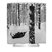 Pine Forest In January Shower Curtain