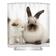 Ragdoll-cross Kitten And Young Shower Curtain